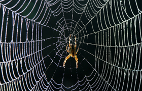Orb Spider on web with frozen dew